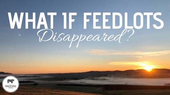 What if feedlots disappeared_