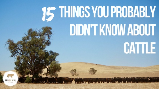 15 things you probably didn't know about cattle