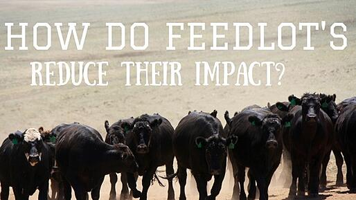How Do Feedlot's Reduce their Impact.jpg