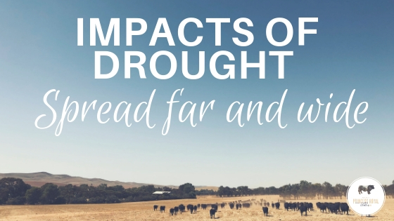 Impact of drought spread far and wide