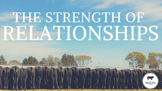 The strength of relationships 2