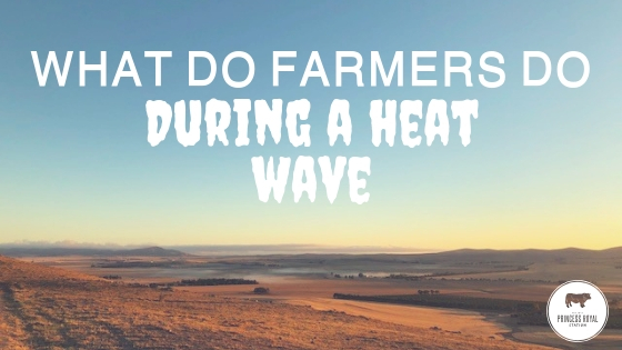 What do farmers do during a heat wave_