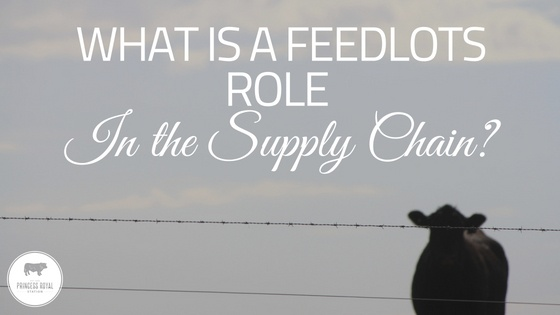 What is a feedlot's role in the supply chain_ (1)