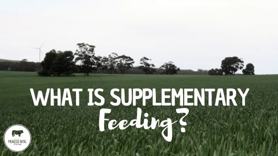 What is supplementary feeding_