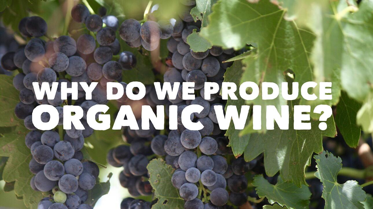 Princess Royal Station - Why Do We Produce Organic Wine?