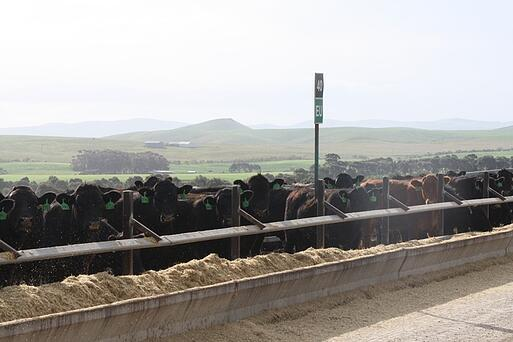 Princess Royal Feedlot.jpg
