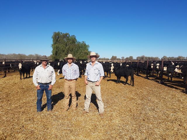 Jack, Luke and David Woolard at the Alice Springs Sale, NT
