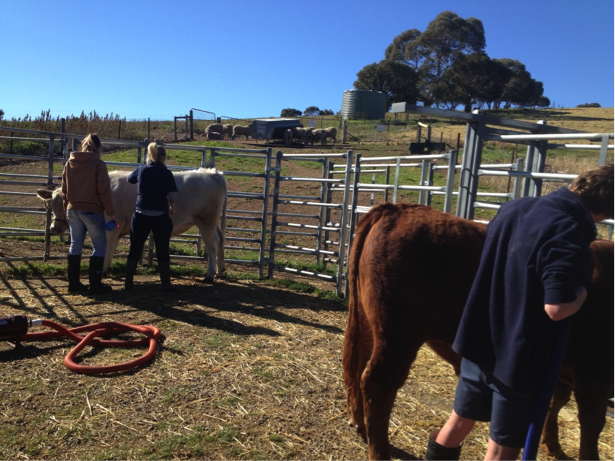 Princess Royal and the Burra Community School Agriculture Program