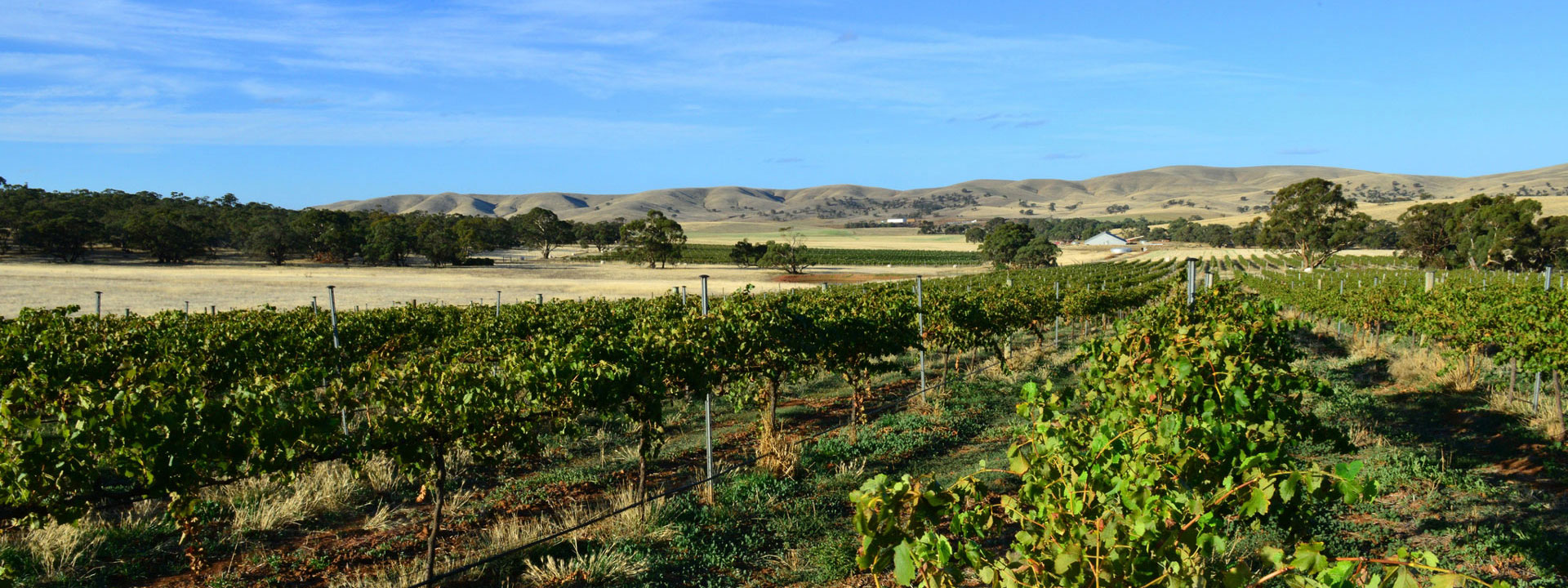 Burra Creek Wines Vineyard
