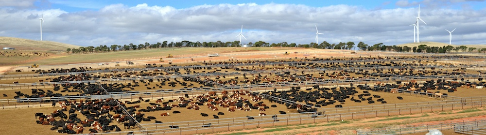 Princess Royal Station Feedlot
