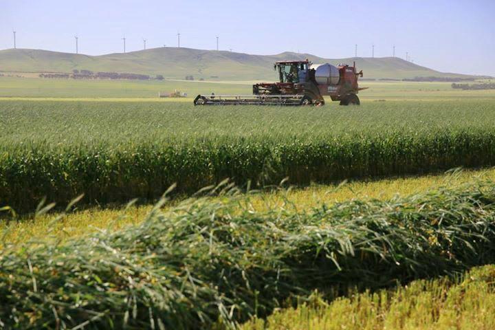 harvesting-1.jpg