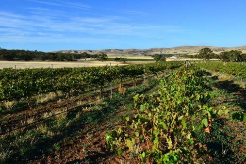 Burra Creek Wines, South Australia