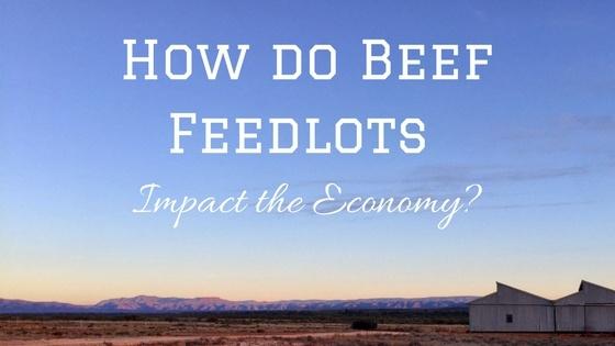 How do beef feedlots impact the economy-.jpg
