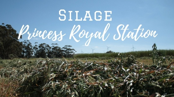 Silage - Princess Royal Station.jpg
