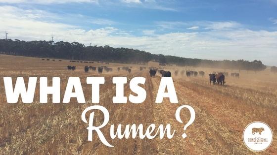 What is a Rumen_.jpg